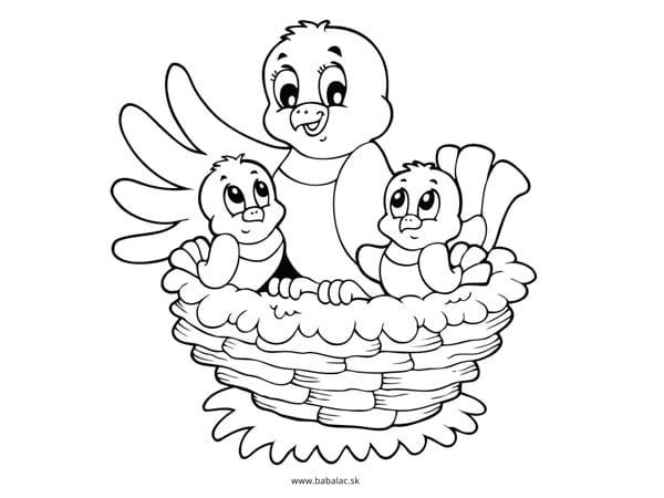 Omaľovánky pre deti vtáci v hniezde